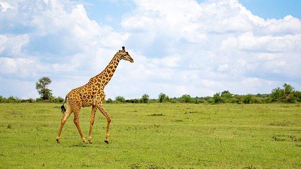 Die Giraffe als tierische Inspiration: Geschichte der circaid Produkte