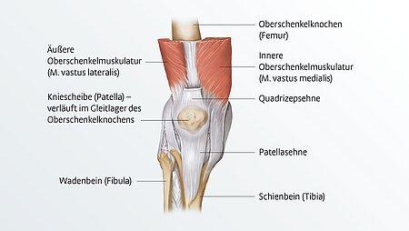 Anatomie des Knies - Anatomie des Knies