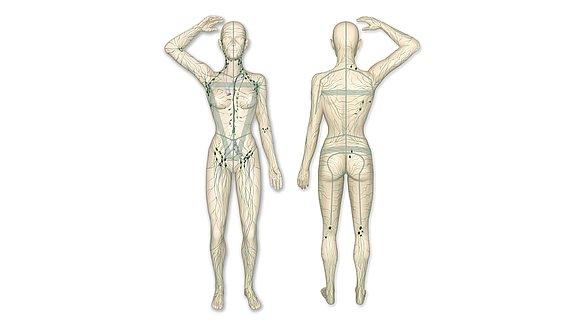 Das Lymphsystem des Menschen - Lymphsystem