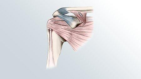 Unsere Schulter: Ein komplexes Gelenk