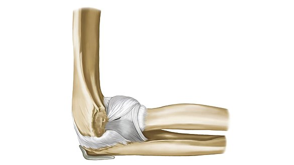 Elbow joint - Elbow joint