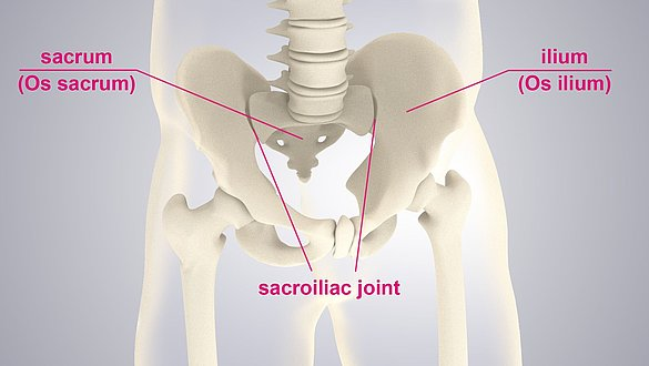 Sacroiliac joints - Sacroiliac joints